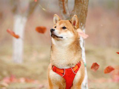 Dogecoin TikTok Spike Mengangkat Pertanyaan Serius Tentang Pasar Crypto